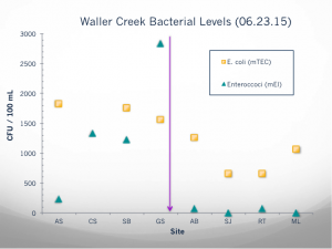 These are the values of bacteria (E.coli and enterococci) at each of the sites sampled by the high school students. The purple line represents the point at which the bacterial levels dropped.